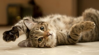National Cat Day: 12 Hilarious Cat GIFs To Celebrate Holiday