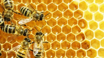 Bee Pollen Might Be A Cure For PMS