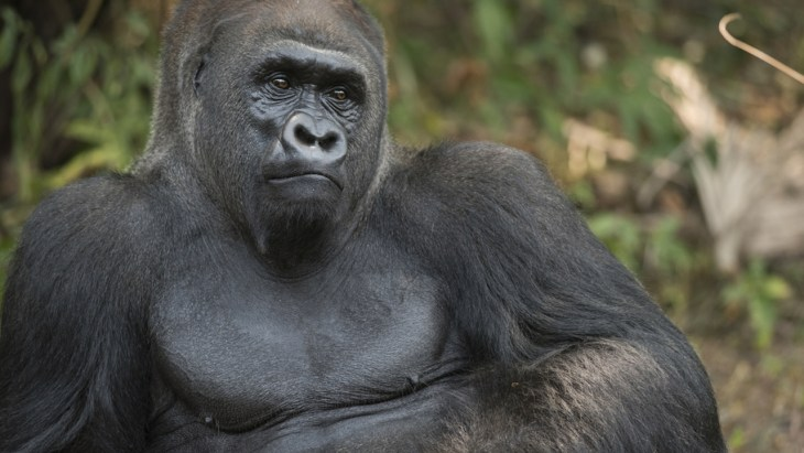 Ohio man found 'acting like gorilla,' touching himself in public