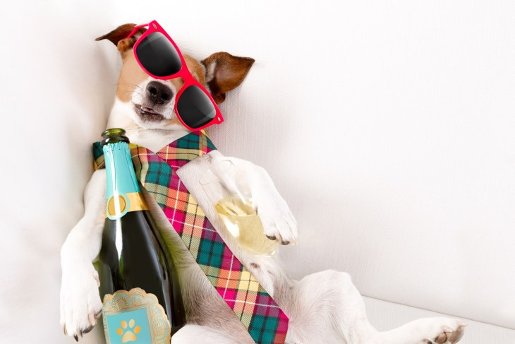 dog with crooked sunglasses on wearing a tie and a bottle of champagne