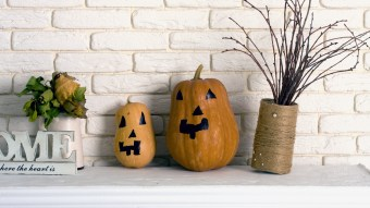 11 Cheap & Useful Fall Decorations to Buy For Your Dorm Room