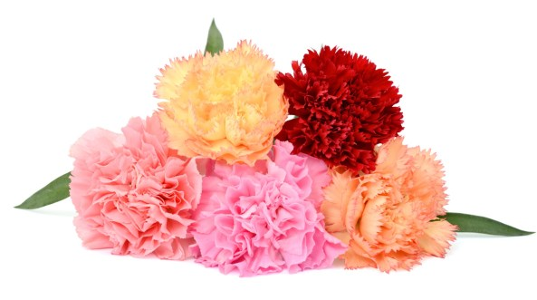 Five carnations laid on each other, one yellow, one red, one salmon-colored, one pink and one orange.