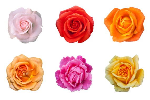 Different colored roses layer out. First row, left to right: white, red, bright orange. Second row, left to right: light orange, pink, yellow.