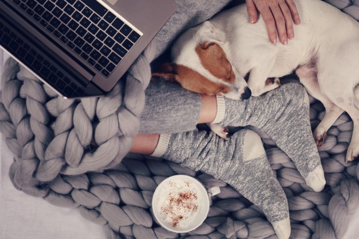 Woman in cozy home clothes relaxing at home with sleeping dog drinking cacao, using laptop.