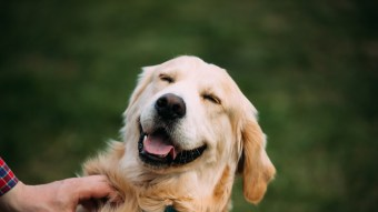 Pet Care: Different Types of CBD Oil to Maintain Your Dog's Health
