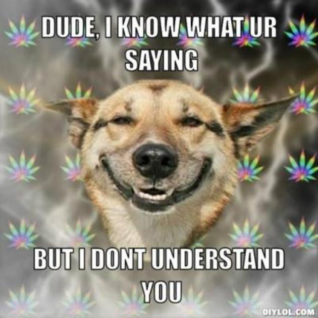 Stoner-Dog-4
