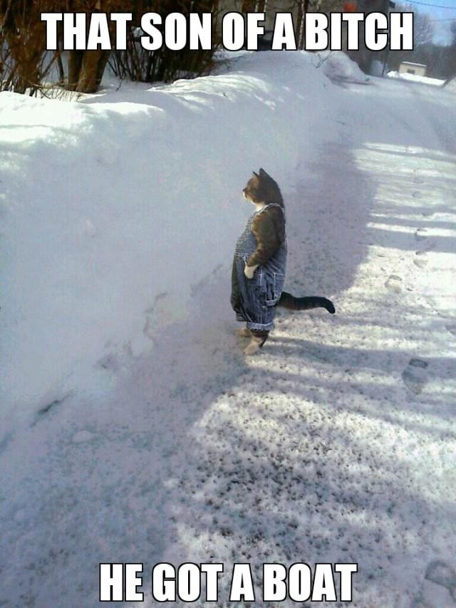 cat-day06