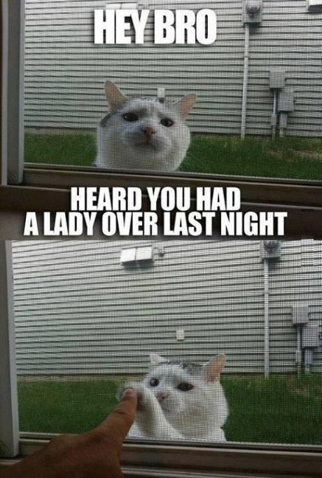 cat-day07
