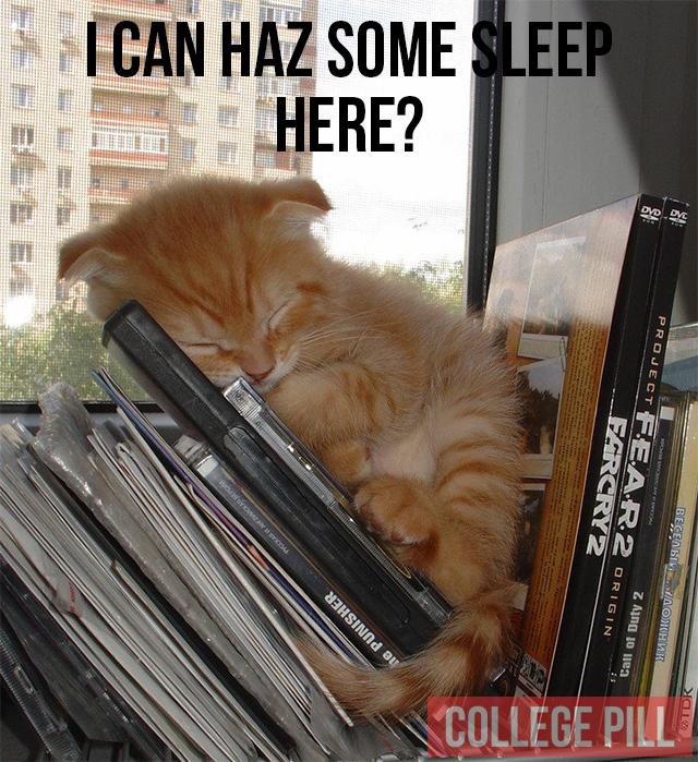 cat-day24