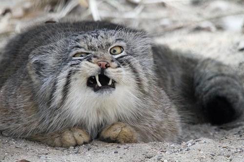 funniest-cats-sneeze-10
