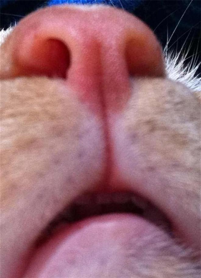 funny-cat-selfies-12