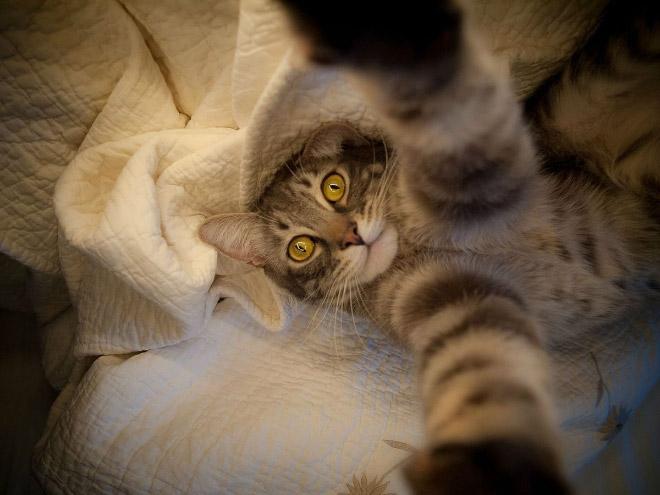 funny-cat-selfies-4