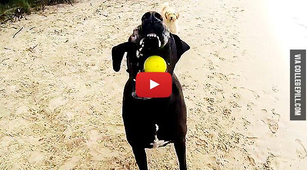happy-dogs-australia-beach