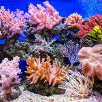 Crowe Bar: Professor Tasman Crowe and Marine Protected Areas