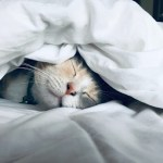 Night in Shining Armour: The Benefits of a Good Sleep