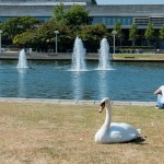 UCD SWANS HAVE BEEN REPLACED WITH COMMUNIST SWAN BOTS