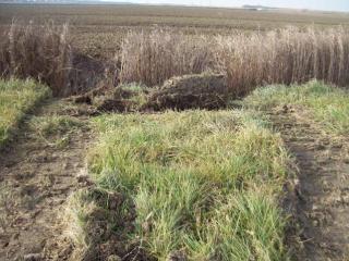Segni del passaggio di escavatori del Consorzio di Bonifica nella proprietà di Novi