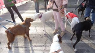 Cani in cerca di adozione al canile di Massa.