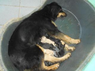 Tata (Y'amorecaperis dell'Abete Bianco) e i suoi cuccioli.