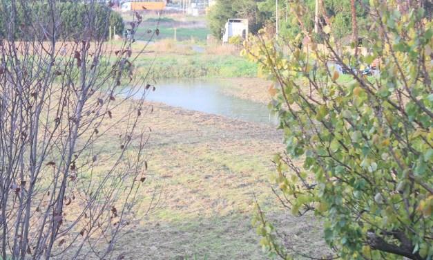 """MALTEMPO, LA REGIONE: """"LE AZIENDE AGRICOLE CHE HANNO RIPORTATO DANNI POTRANNO SEGNALARLI SU ARTEA"""""""
