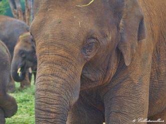 Elefanten im Bannerghatta Biological Park