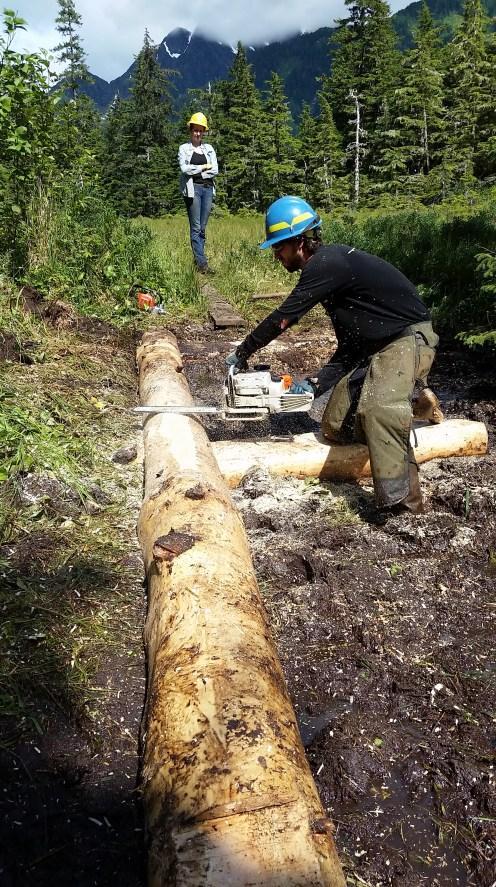 Eyak River Trail Split Log