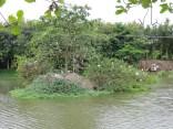 Croc Sanctuary 2