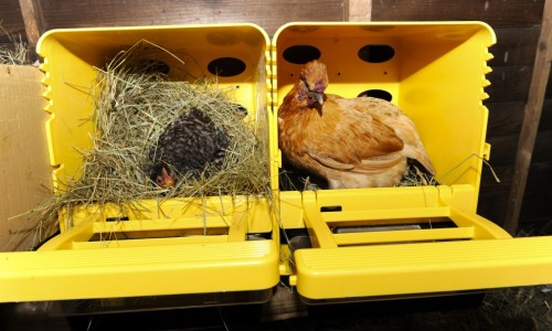 Chick Box Nest Box for Chickens