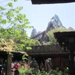 Disney: Animal Kingdom & Back to The Magic Kingdom