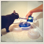 Day 27, Part 2: Tap. I am Zoe's personal water tap. (I hated my 1st picture so did a do-over.)