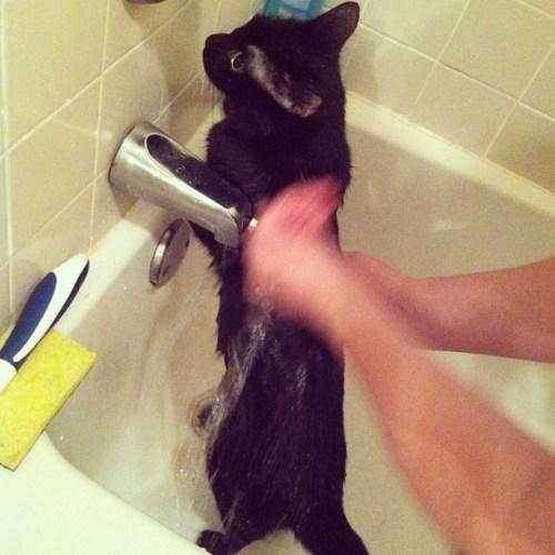 Zoe-cat-shower