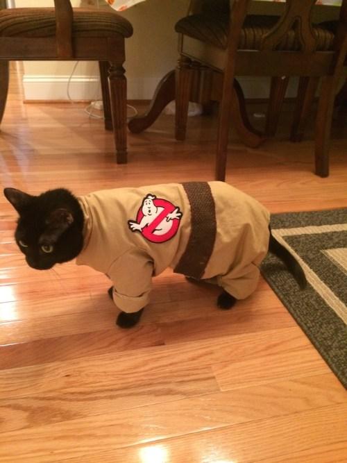 halloween2014-zoe-ghostbustercat
