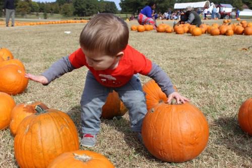 pumpkinpicking2015-12