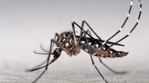 Bijna 43000 gevallen van Zikavirus in Colombia