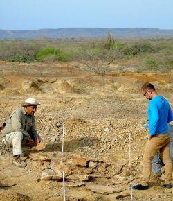 Grootste schildpadfossiel ooit gevonden in Tatacoa-woestijn