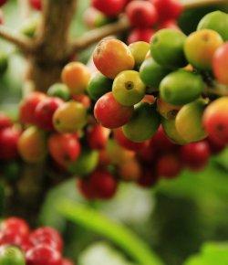 Colombiaanse koffieproductie steeg in mei met 6%