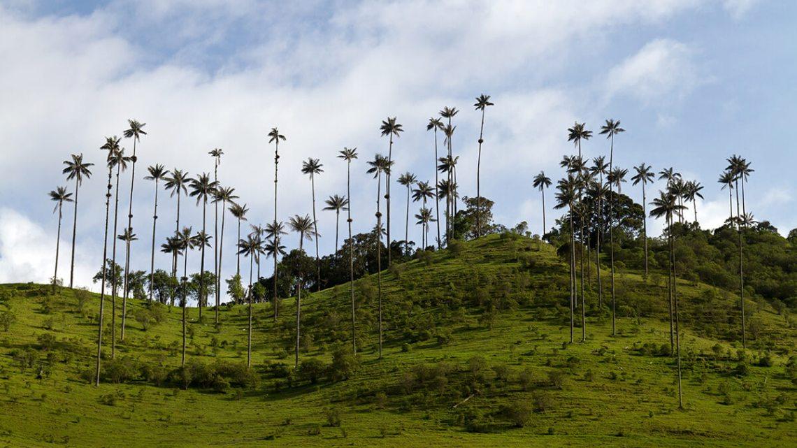 Nationaal park Los Nevados Colombia