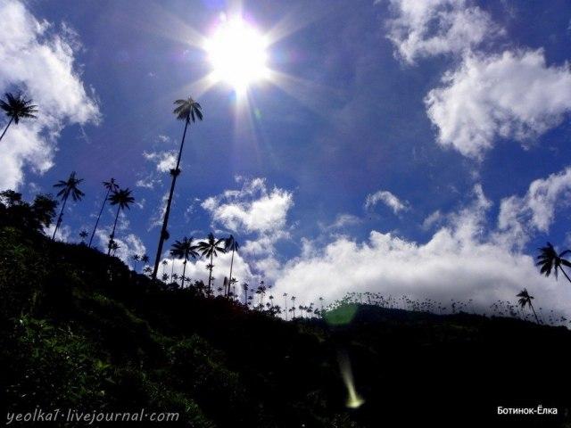Долина Кокора - самые высокие в мире пальмы
