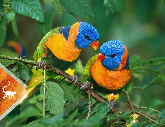 Bird watching - birds - Colombia -ColombiaTours.Travel - - Otún Quimbaya Fauna and Flora Sanctuary