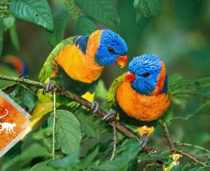 Bird watching - birds - Colombia -ColombiaTours.Travel - - Otún Quimbaya Fauna and Flora Sanctuary