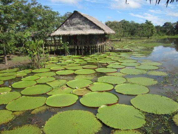 Amazonas Plan Amazonas Natura Park Colombia Viajes