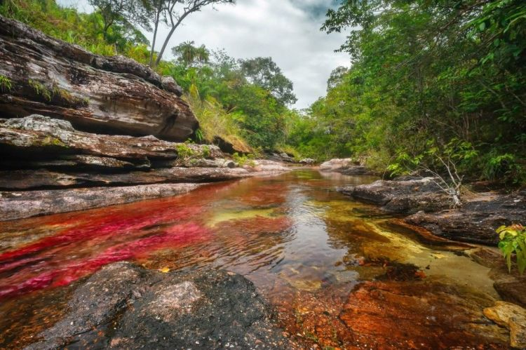 Travel Guide Caño Cristales Colombia, Meta, La Macarena, River Colombia, Travel Plans, Recommendations to travel to Caño Cristales, Where to stay, How to get