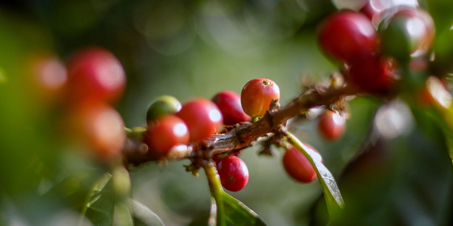 Coffee Cultural Landscape, enjoy a beautiful heritage of humanity