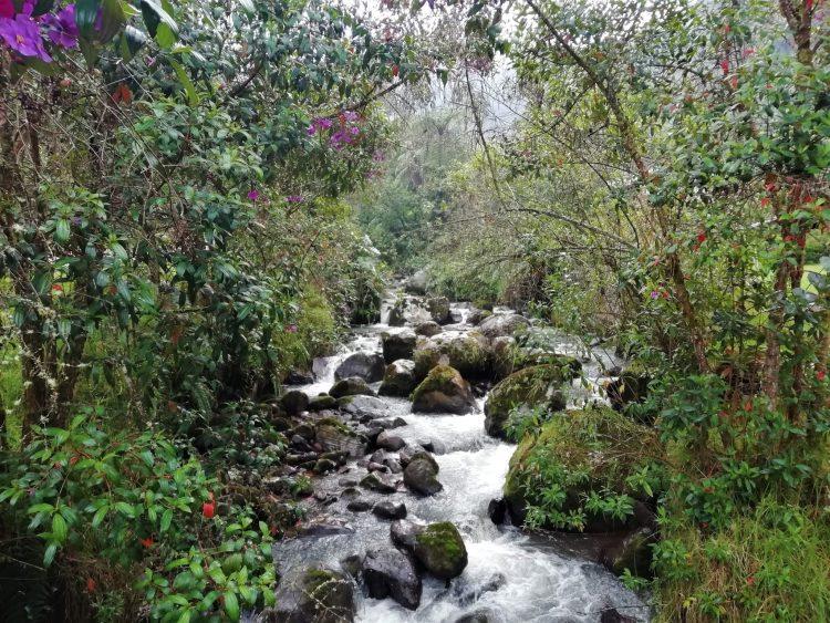 Hot Springs of San Vicente - Santa Rosa de Cabal - Nature Reserve - Coffee Region - Colombia - Transportation Plan