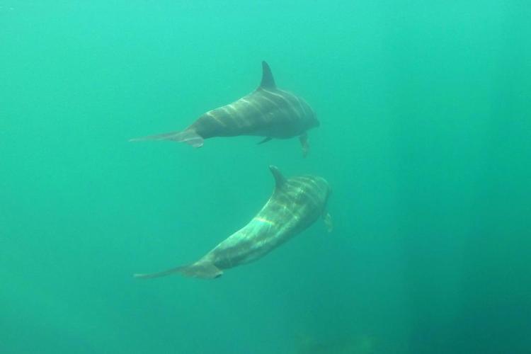 Dolphins - Nuqui Choco - Colombian Pacific - Tourist Plans - ColombiaTours