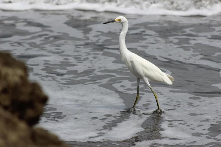 Birds - Nuqui Choco - Colombian Pacific - Tourist Plans - ColombiaTours