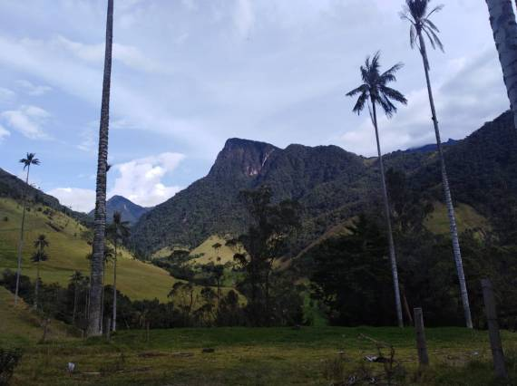 Atardecer Valle del cocora
