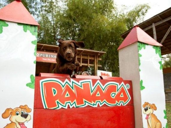 Show-dogs-park-panaca-quindio-coffee-axis-colombia