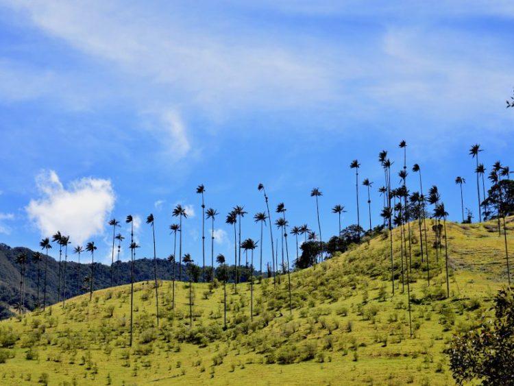 Cavalcade Valle de Cocora, natural refuge of the national tree in Colombia, Palma de Cera. Salento, Quindio. cabin-romantic-valley-of-cocora-palma-de-cera-colombia - Coffee Cultural Landscape Plan