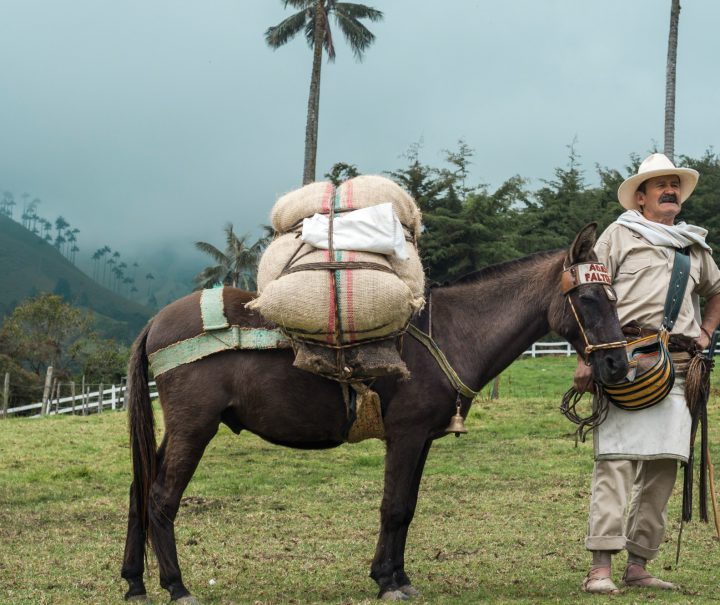 Arriero paisa in the Cocora Valley - Eje Cafetero, Colombia